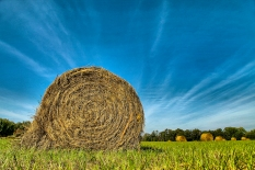 Hay in the field.
