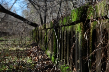 Creepy Moss-Covered Bridge