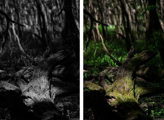 treefall49.jpg